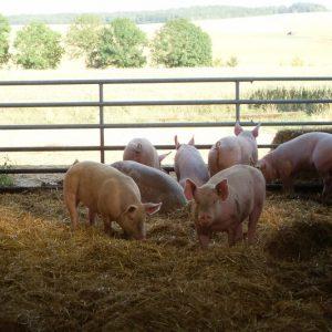 Viande de porc BIO